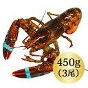 ◆活オマールロブスター(450gx3尾)お買い得/カナダ直輸入/オマール 海老/ロブスター/還暦 の お祝い/肉厚/ パーティー/記念日/テルミドール/新鮮