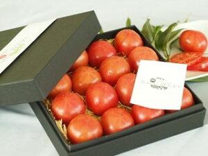 kitachi ROSSO 化粧箱入り1.0kg 塩熟トマト トマト 母の日