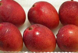 《販売発送中》《超早出し》【お買得】宮崎産完熟ミニマンゴー【赤秀】5〜8玉入り。およそ470gパック入り。 祝母の日 祝父の日 ギフト商品
