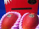 『母の日サービス商品』太陽のタマゴ宮崎産完熟マンゴー【青秀】2玉入り およそ900g化粧箱入り。 【楽ギフ_包装】【楽ギフ_のし宛書】 母の日・父の日・ギフト商...