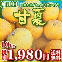【加甘10】(加工用・サイズお任せ)甘夏10kg               【愛媛県産】【基本送料無料】