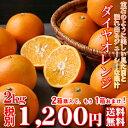 【daiya02】ダイヤオレンジ 2kg(大谷伊予柑)(訳有り・大小サイズ込・葉傷枝傷等がございます。)2箱ご購入頂くともう1箱おまけが付…
