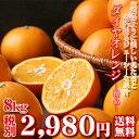 【daiyaseihin02】【贈答用にもおすすめ!】ダイヤオレンジ -精品- 8kg(大谷伊予柑)(精品・大小サイズ込・多少の葉傷枝傷等が含まれ…