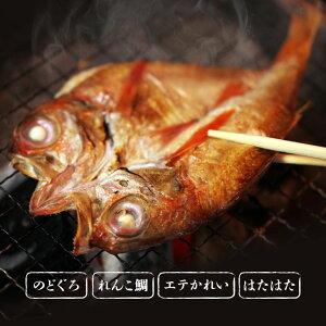 【直送】 塩だけで作った 「1日漁」 一夜干し 特別詰め合わせ (北海道・沖縄・離島配送不可) - のどぐろ 鯛 カレイ はたはた セット 日本産 島根 一夜干し 干物 ギフト プレゼント