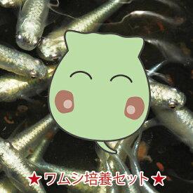 淡水ワムシ 培養液入り500ml 生体 めだか 目高 メダカ 熱帯魚 魚 ワムシ わむし 輪虫 稚魚 エサ えさ 餌 活餌 生きエサ