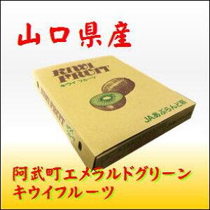 山口産キウイフルーツ 27玉サイズ