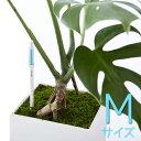 【リニューアル/中芯交換可】 水分計 サスティ Mサイズ 水やり サスティー SUS・tee 多肉植物 野菜 観葉植物 蘭 洋ラン 土壌