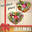【送料無料/当店お任せの寄せ植え】 サキュレントリース L 多肉植物 寄せ植え セット ギフト プレゼント