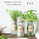 【送料無料】 水耕栽培 キット モダンスプラウト エコプランター ミント Modern Sprout Eco Planter 種 種子 水栽培 ギフト 母の日 栽…