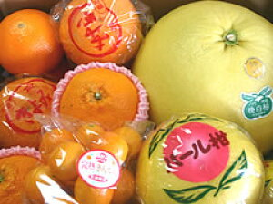 熊本のフルーツギフト熊本の柑橘詰合せ