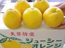 ジューシーフルーツ・熊本天草晩柑7.5kg箱入り【限定販売】