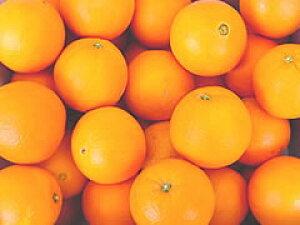 熊本産ネーブルオレンジ 5kg箱入り