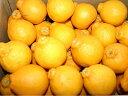 【訳あり】ふるさと果樹園の不知火(デコポン)小さめサイズ5kg