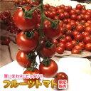 【送料無料】 限定販売/フルーツトマト 1,3kg 熊本産 ミニトマト 国産トマト 高糖度 トマト 箱 贈答品 贈答 贈り物 お取り寄せ 箱入り 夏野菜 野菜