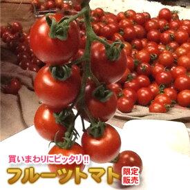 【送料無料】 限定販売/フルーツトマト 800g 熊本産 ミニトマト 国産トマト 高糖度 トマト 箱 贈答品 贈答 贈り物 お取り寄せ おとりよせ 箱入り 夏野菜 野菜 甘い あまい おいしい