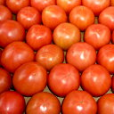 【送料無料】塩トマト むつごろう約1.0kg 熊本産 ミネラル豊富! 糖度8度以上保証 フルーツ感覚 しあわせ畑 とま…