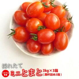 ミニトマト 糖度8度以上 保証 朝採り/減農薬 トマト 新鮮 ミネラルミニトマト 9.0kg 熊本産 国産トマト プチトマト 高糖度 旬 野菜 新鮮野菜 熊本県 産 贈答 品 贈り物 ご当地 お取り寄せ 甘いとまと あまいトマト ダイエット 美容 リコピン カロチン ビタミンE