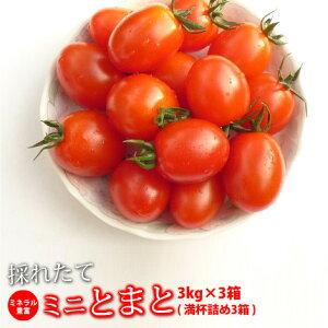 ミニトマト 糖度8度以上 保証 朝採り/減農薬 トマト 新鮮 ミネラルミニトマト 9.0kg  熊本産 国産トマト プチトマト 高糖度 旬 野菜 新鮮野菜 熊本県 産 贈答 品 贈り物 ご当地 お取り寄せ 甘