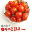 ミニトマト 糖度8度以上 保証 【送料無料】減農薬 トマト/新鮮 ミネラルミニトマト 800g 熊本産 国産トマト プチトマ…