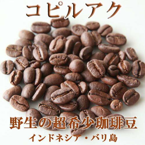 【野生】【売れ筋】【オススメ】100g コピルアク ジャコウネココーヒー コピルアック【浅煎】