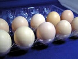 烏骨鶏の卵 (うこっけいのたまご ウコッケイのタマゴ) 20個 【楽ギフ_のし】