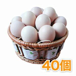 烏骨鶏の卵 (うこっけいのたまご|ウコッケイのタマゴ) 40個 【楽ギフ_のし】