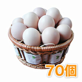 烏骨鶏の卵 (うこっけいのたまご|ウコッケイのタマゴ) 70個