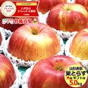 【2020/予約】りんご 葉とらずりんご 5kg (秀品/14玉〜20玉入り)【山形県産/リンゴ/サンふじ/葉とらずふじ/葉とらずサ…