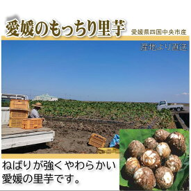 愛媛のもっちり里芋 約3.5kg 秀品【送料無料】【掘りたて里芋を産地直送】