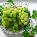 【訳あり】山形県産ぶどうシャインマスカット[2〜3房]