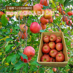 【2箱買うと送料無料】山形の【訳あり】ふじりんご5kg