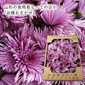 山形の食用菊もってのほか(品種おまかせ)1kg