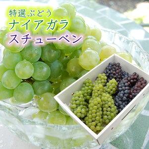 特選ぶどうナイアガラとスチューベン詰め合わせ4kg(12〜14房)