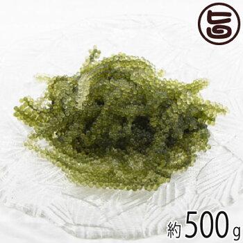 純沖縄産A品朝摘み生海ぶどうオジーの夢500g海月