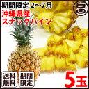 期間限定 4〜7月 元築地の目利きの達人が選ぶ 沖縄県産 スナックパイン×5玉 条件付き送料無料 南国フルーツ 果物