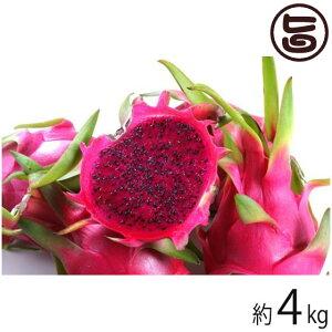 家庭用 沖縄産 ピタヤ レッドドラゴンフルーツ 約4kg 沖縄 フルーツ お土産  送料無料