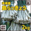 沖縄産島らっきょう2kg送料無料沖縄野菜お土産