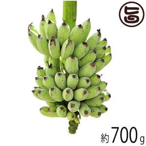 島バナナ 沖縄県産 無農薬 無化学肥料 ハワイ種 700g以上 島バナナ 南国フルーツ 朝食  送料無料