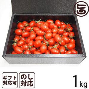 ギフト GINZA FARM 高糖度プレミアムトマト 1kg ギフト箱入り 新鮮 高級 甘いとまと 産地直送  条件付き送料無料