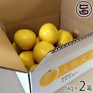 農薬をまいていない 文旦 5kg×2箱 ご家庭用 ひよこ皮むき器付 条件付き送料無料