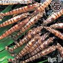 お歳暮 久米島の活き車えび 1kg(30〜50尾)×1P 沖縄 人気 ギフト 希少 鮮度抜群 車海老 送料無料