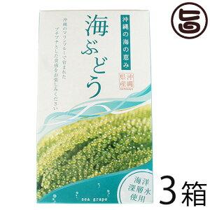 グローアップコーポレーションF 海ぶどう 120g×3箱 海洋深層水使用 海藻 うみぶどう 沖縄 土産 定番 人気 送料無料