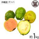 期間限定 7〜9月 沖縄産 グァバ 約1kg 赤・白どちらになるかはお任せになります 沖縄 人気 南国フルーツ 希少 土産 条…