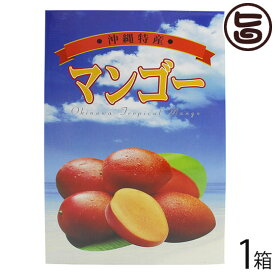 ギフト ヒロ農園 沖縄産マンゴー 2kg 5〜6玉×1箱 沖縄 人気 トロピカルフルーツ 送料無料