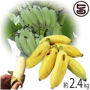 【今が旬】 沖縄県産 銀バナナ 約2.4kg Banana Party 甘みが強くほどよい酸味 自然本来の味の無農薬国産バナナ 送料無料