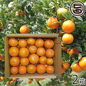屋久島たんかん 自家用 5kg 約30玉〜約40玉×2箱 みかん フルーツ 果物 柑橘 新鮮 条件付き送料無料
