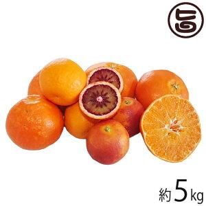 グランジャ 愛媛県宇和島産 柑橘ミックス 5kg A品 ブラッドオレンジ ぽんかん いよかん でこぽん せとか 条件付き送料無料
