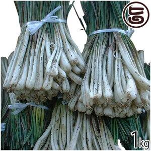 沖縄産島らっきょう 1kg 沖縄 人気 南国野菜 希少 土産 条件付き送料無料