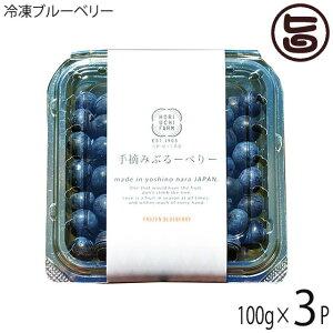 冷凍ブルーベリー100g×3P 堀うち農園 無農薬栽培 安心 安全 条件付き送料無料