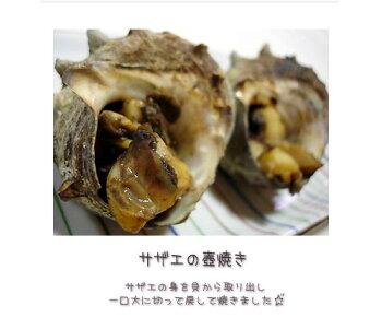 隠岐のさざえ1kg日本海隠岐活魚倶楽部